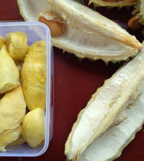 Legit Pahit Durian Bawor Asli Banyumas